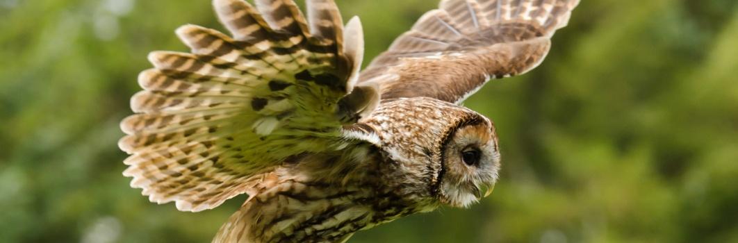 Ornitologia1