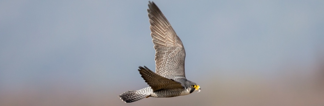Ornitologia2