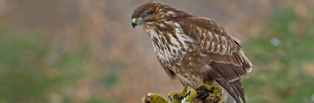 Ornitologia3